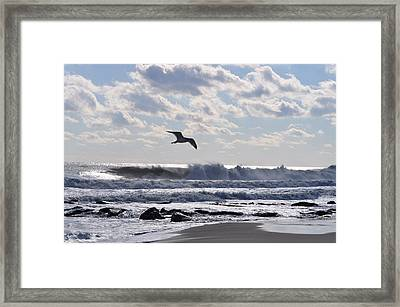 Free Spirit Framed Print by Joe  Burns