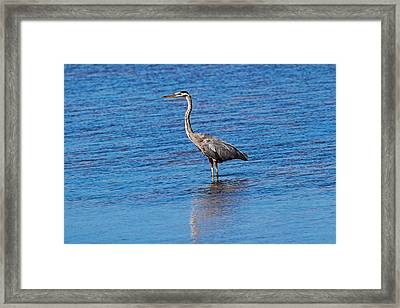 Framed Print featuring the photograph Free Spirit by Michiale Schneider
