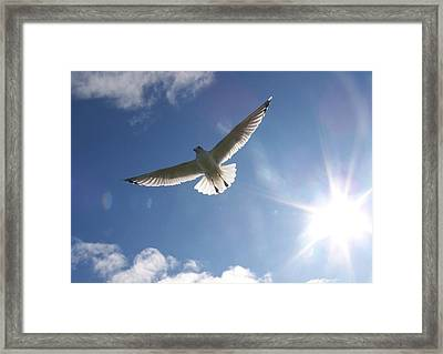 Freedom - Photograph Framed Print