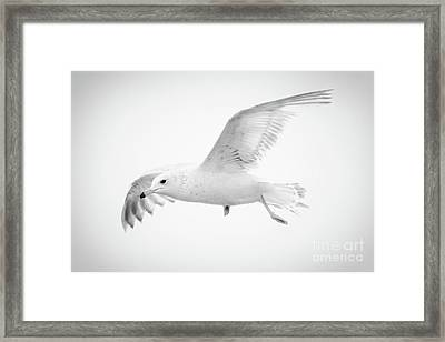 Freedom Framed Print by Anita Oakley