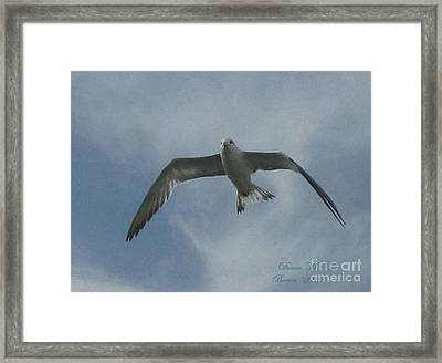 Framed Print featuring the photograph Freedom by Donna Brown