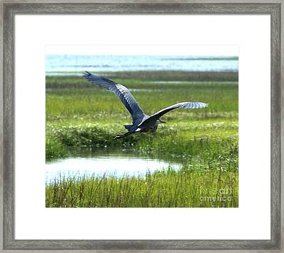 Freedom Flight Framed Print by Debbie May