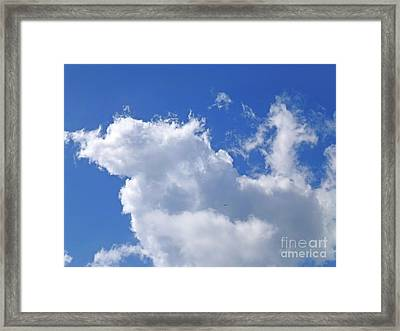 Framed Print featuring the photograph Freedom by Francesca Mackenney