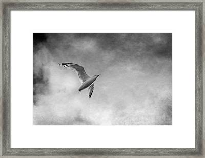 Freedom In Black And White Framed Print by Maggie Terlecki