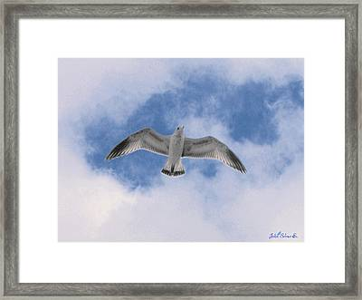 Freedom Framed Print by John Selmer Sr