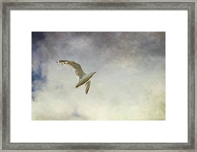 Freedom Framed Print by Maggie Terlecki