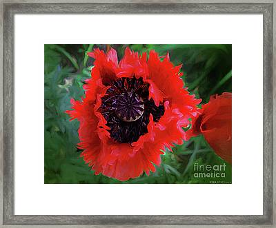 Freedom Framed Print by Mona Stut