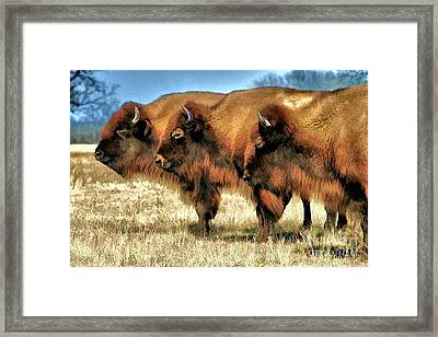 Freedom Roam Framed Print