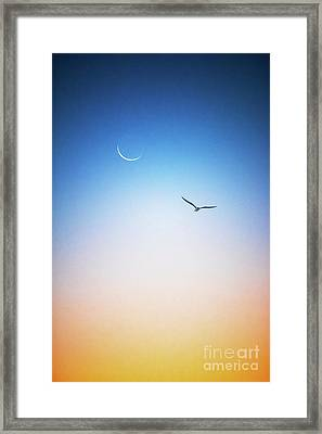 Freedom Framed Print by Russ Brown
