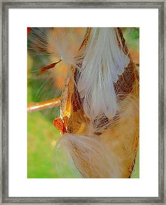 Freedom To  Fly Away Framed Print by Beth Akerman