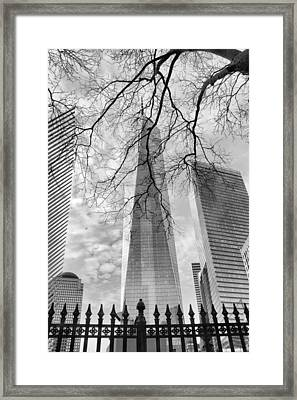Standing Tall Framed Print by Jessica Jenney