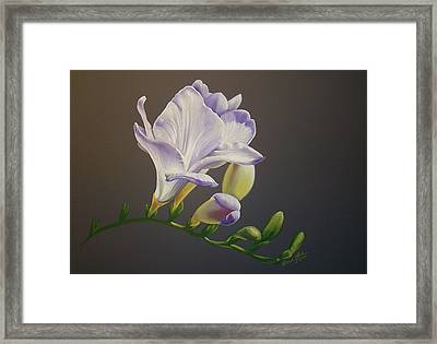 Freesia 1 Framed Print by Brandi York