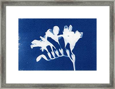 Freesia Framed Print by Elspeth Ross