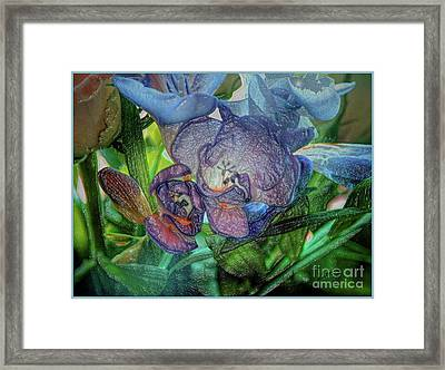 Framed Print featuring the photograph Freesia Multi Coloured by Lance Sheridan-Peel