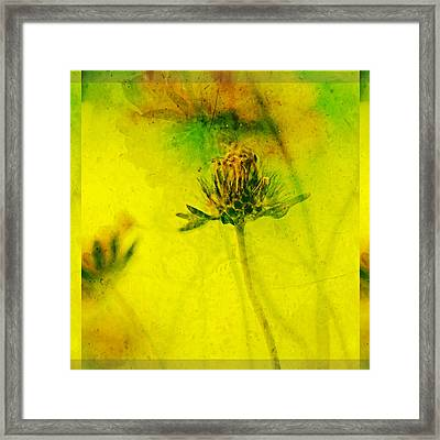 Freesia Yellow Flower  Framed Print by Bonnie Bruno