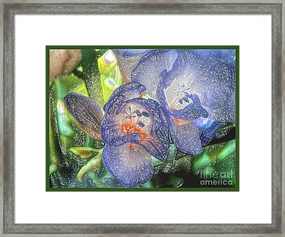Framed Print featuring the photograph Freesia's In Bloom by Lance Sheridan-Peel