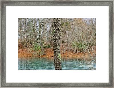 Freeze Frame Framed Print