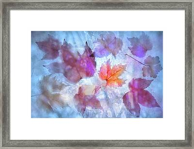 Freeze Framed Print by Richard Piper