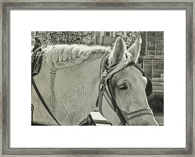 French Braided Gray Framed Print by JAMART Photography