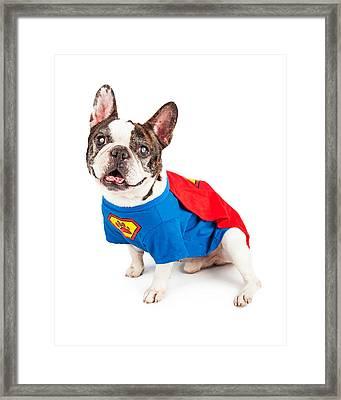 French Bulldog Dog In Super Hero Costume Framed Print by Susan Schmitz