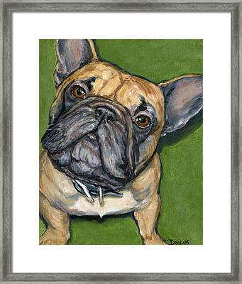 French Bulldog Looking Up On Green Framed Print by Dottie Dracos