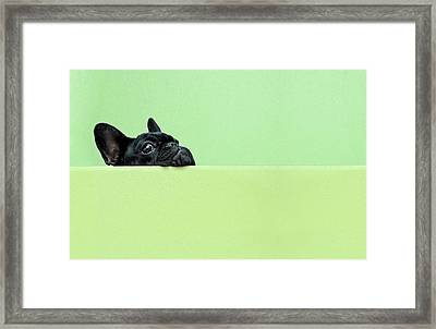 French Bulldog Puppy Framed Print by Retales Botijero