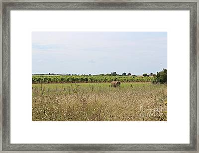 French Countryside Framed Print by Cendrine Marrouat