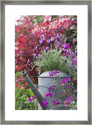 French Lavender Framed Print by Tim Gainey