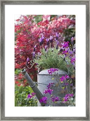 French Lavender Framed Print