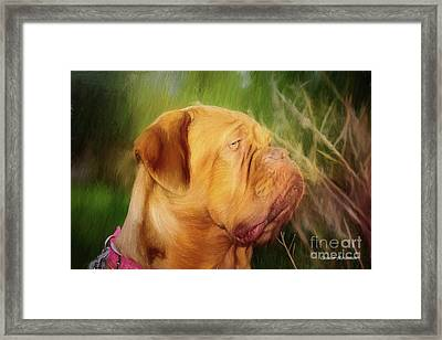 French Mastiff  Framed Print by Eleanor Abramson