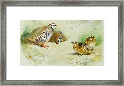 French Partridge And Chicks Framed Print by Archibald Thorburn