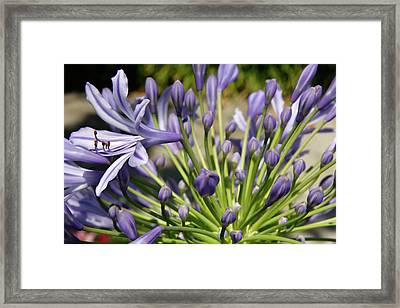 Framed Print featuring the photograph French Quarter Floral by KG Thienemann