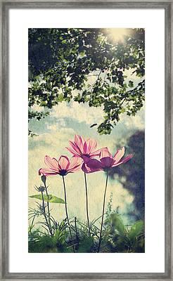 French Wild Flowers Framed Print