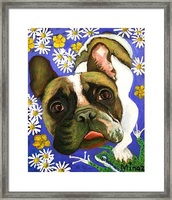 Frenchie Plays With Frogs Framed Print