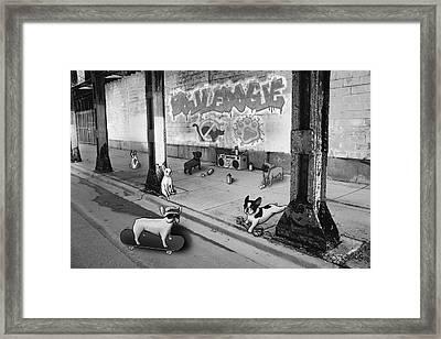 Frenchie Street Gang - Black And White Framed Print