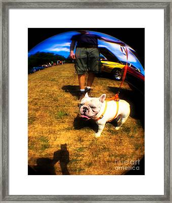 Frenchy At The Car Show  Framed Print
