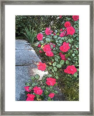 Fresco Roses Framed Print by Karen Fowler