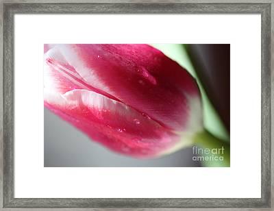 Fresh Framed Print by Amanda Barcon