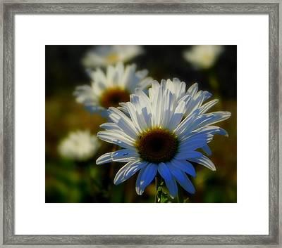 Fresh As A Daisy Framed Print by Karen Cook