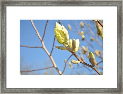 Fresh As Fresh Can Be Framed Print by Tina M Wenger