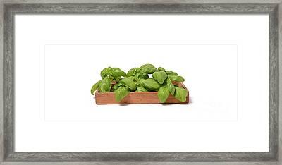 Fresh Basil Framed Print by Andreas Berheide