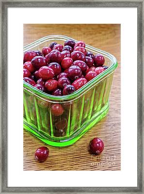 Fresh Cape Cod Cranberries Framed Print by Edward Fielding