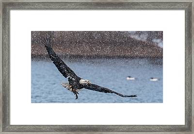 Framed Print featuring the photograph Fresh Catch by Kelly Marquardt