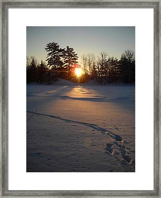 Fresh Deer Tracks At Sunrise Framed Print