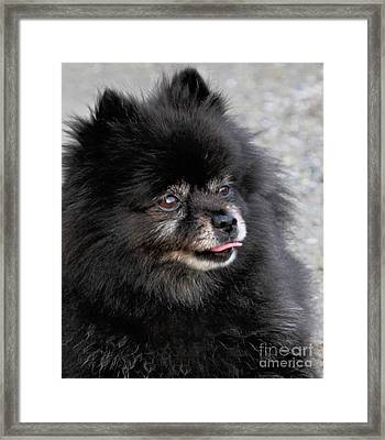 Framed Print featuring the photograph Fresh Dog by Debbie Stahre
