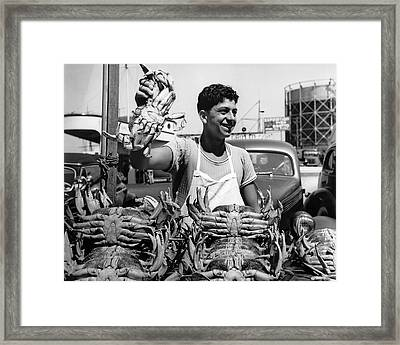 Fresh Dungeness Crab In Sf Framed Print by Underwood Archives