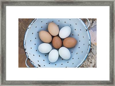 Fresh Eggs Framed Print by Tim Gainey