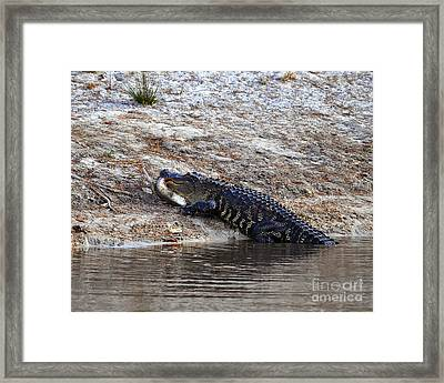 Framed Print featuring the photograph Fresh Fish by Al Powell Photography USA