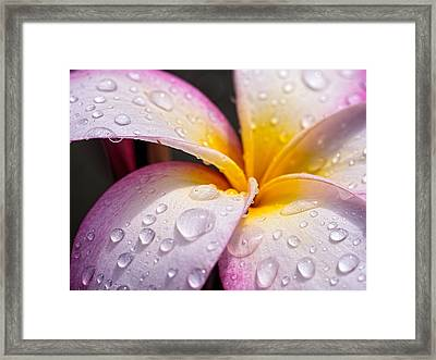 Fresh Flower Framed Print