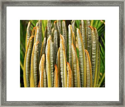 Fresh Fronds Framed Print